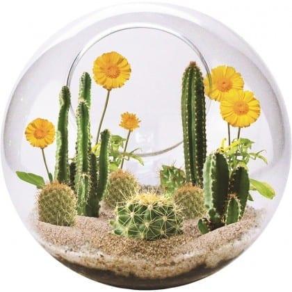 Mini öken-terrarium